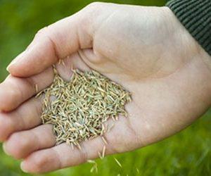 тревни семена