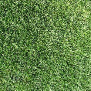 """Видове тревни чимове от Органик Сълюшънс"""""""