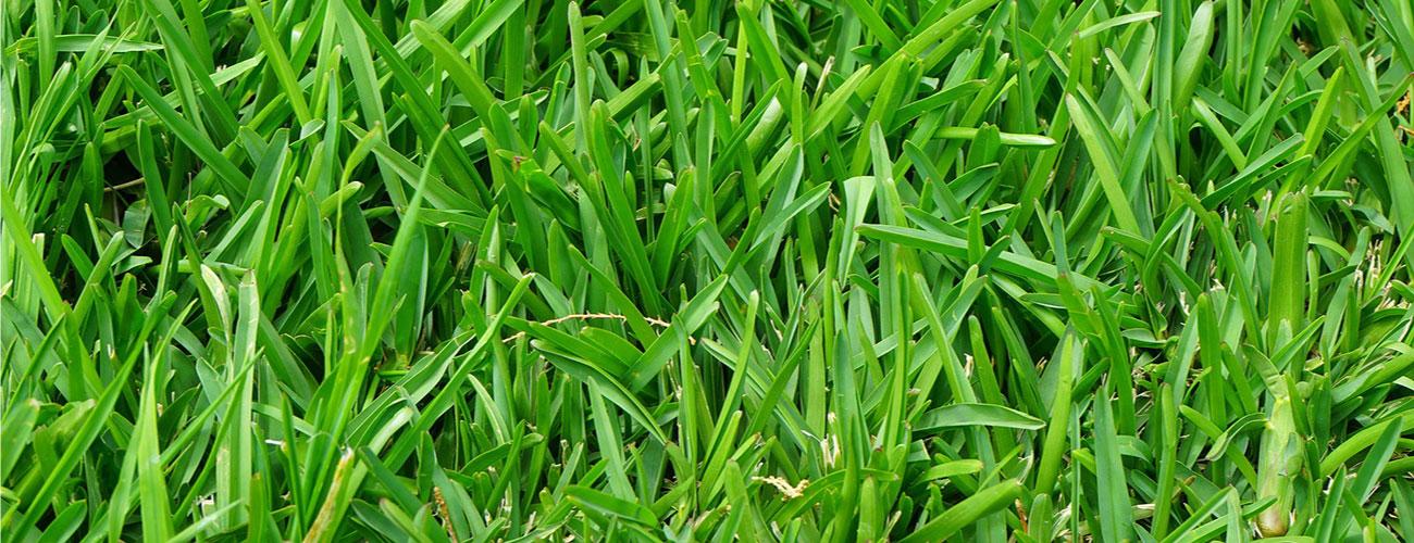 тревни смески и торове